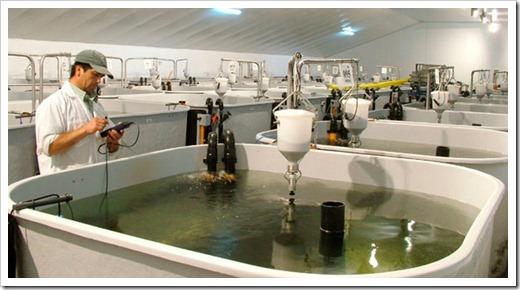 Каким должен быть бассейн для выращивания рыбы?